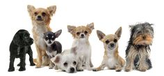 Top 22 Tips on Keeping Your Small Dog Healthy