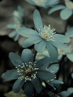 Beautiful turqoise flowers