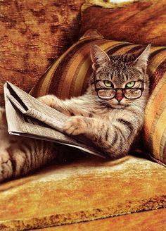 cat reading newspaper ... interupted :)
