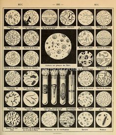 'bacteria culture vintage french science journal' Poster by Harrison Dolan Room Posters, Poster Wall, Poster Prints, Biology Major, Science Illustration, Culture, Vintage Posters, Vintage Prints, Wall Collage