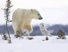 https://flic.kr/p/qMJKZN | Polar Bears, babies, animals | RANDOM