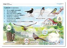 Ptáci | datakabinet.cz