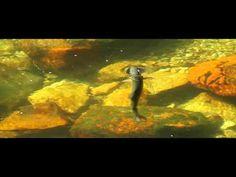 New Zealand A Dry Fly Short – amberjack Fishing 101, Fishing Videos, Fishing Humor, Gone Fishing, Kayak Fishing, Fishing Stuff, Girls Fishing Quotes, Fishing Girls, Most Beautiful Pictures