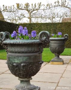 Tone on Tone Hyacinth in urns