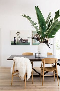 Boho inspired dining space with a large indoor plant