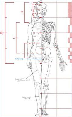 """Résultat de recherche d'images pour """"Anatomie"""""""
