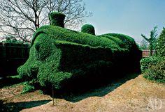 """Topiary """"locomotiva"""" em Reyndzhuorti, Reino Unido.Desde os dias dos labirintos da Renascença foram intimamente ligado com encaracolado - Topiary verde - de cabelos. Em primeiro lugar, porque o corte de cabelo - a única maneira de formar uma parede verde denso, cobertura, sem o qual não pode haver labirinto. E os animais fantásticos que habitam o labirinto foi feito no projeto """"verde"""" olhar muito mais interessante e espetacular."""