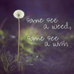 Some see a weed, some see a wish. #perception