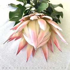 Pastel Decor, Pastel Pink, King Protea, African Flowers, White Houses, White Decor, Interior Styling, Pink Flowers, Bridal
