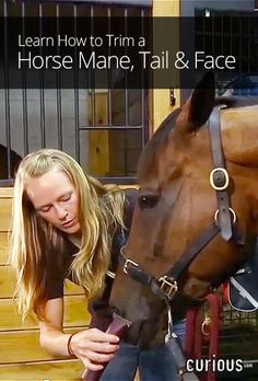 How to Trim a Horse Mane, Tail & Face