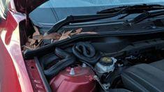 Hiss off! Venomous snake takes refuge in Australian man's engine bay