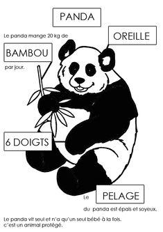 Carte d'identité panda...Chine