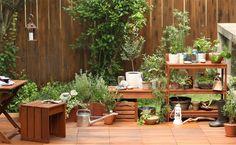 Garden Trees, Terrace Garden, Muji Style, Green Garden, Go Green, Bonsai, Outdoor Living, Garden Design, Backyard