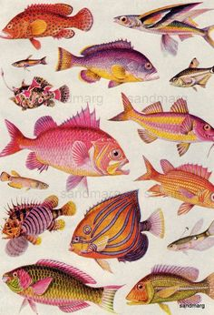 Vintage Tropical Fish Double Sided Chart to Frame by sandmarg