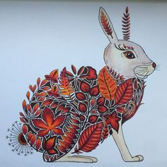 Johanna Basford | Picture by Gill Mundin | Colouring Gallery