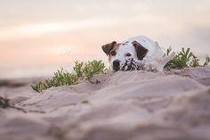 Alles Gute zum Welthundetag von Isis Maria S. #dog #photography #beach #jackrussell #sunrise