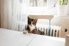 herz und blut: Hausbesuch bei der Katze Kasimir passend zum Welt Katzentag