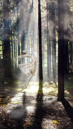 Dancing in the woods Fine Art Photography, Woods, Dancing, Abstract, Illustration, Artwork, Art Work, Work Of Art, Dance