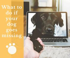National Lost Dog Awareness Day , Lost Dogs of America, Tips on finding a lost dog, what to do if your dog goes missing, how to find your lost dog