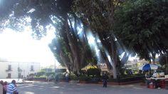 San Juan De Dios, León, Guanajuato. These Trees Were Planted By monks 300 Years Ago.