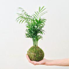 Kokedama - Tocan http://www.wesmelltherain.com/shop/moss-ball-tocan
