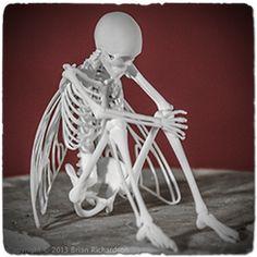 The Rake Skeleton Print Taxidermy Sculpture 3d Printing Diy, 3d Printing Service, Impression 3d, Memento Mori, Machine 3d, 3d Art, Design 3d, 3d Printed Objects, 3d Printed Art