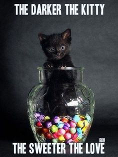 Black cats are the least adopted, and the same goes for dogs. Animals love no matter what color, so should you <3