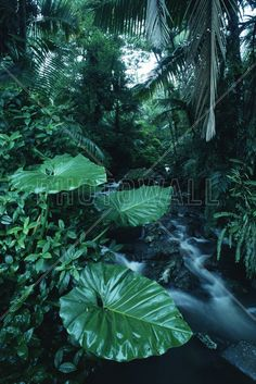 Rainforest - Fototapeten & Tapeten - Photowall