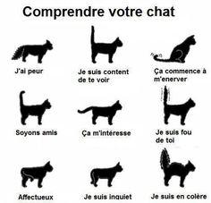 Comprendre votre chat !