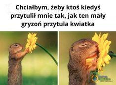 Funny Memes, Humor, Cheer, Humour, Ha Ha, Hilarious Memes, Lifting Humor, Chistes