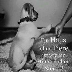 Bild Cruel People, Love People, Dog Quotes, Best Quotes, Dog Friends, Best Friends, Animals And Pets, Cute Animals, World Animal Protection