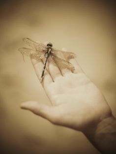 "Time is for dragonflies and angels. The former live too little and the latter live too long."" — James Thurber"