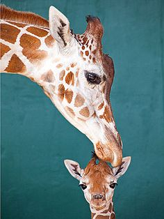 Cute Photos: Baby Giraffe Enjoys Time with Mom | People