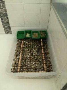 DIY rabbit litter box Flemish sized!