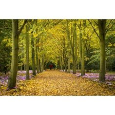 Couple Walking Along Avenue Of Beech Trees Anglesey Abbey Cambridgeshire United Kingdom Canvas Art - Ian Cumming Design Pics (18 x 12)