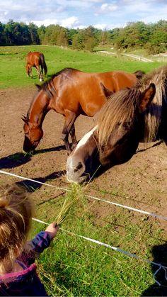 Horses, Travel, Animals, Viajes, Animales, Animaux, Destinations, Animal, Traveling