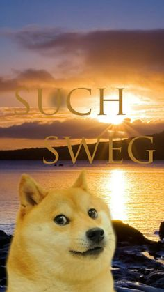 Awesome I figured this sub could use more doge and iPhone wallpapers