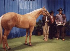 Special Silhouette; 1989; Palomino stallion; (Special Scottish x Skips Trace); Breeder: H. J. Wiescamp; Last owned by J & R Quarter Horses of NE. SHOW RECORD: Reserve World Champion, Halter Point Earner  Performance Point Earner