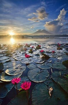 The color is amazing in this photo. Sampaloc Lake Laguna, Philippines