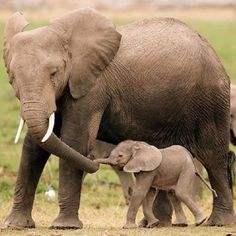 elephant mommy and calf