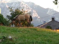 Cavallo di montagna by Italia Multimedia & Laboratori Creativi Beretta