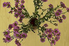 Flowers Body Training, Hunters, Lifestyle Blog, Glow, Interior, Flowers, Plants, Indoor, Design Interiors