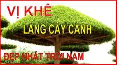 Làng Cây Cảnh Vị Khê Nam Định - Làng Cây Cảnh Đẹp Nhất Trời Nam
