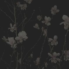 Green power is a subset of renewable energy and represents those renewable energy resources and technologies. Gray Aesthetic, Night Aesthetic, Aesthetic Grunge, Dark Feeds, 8bit Art, Dark Paradise, Dark Pictures, Nocturne, Aesthetic Pictures