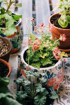 my scandinavian home: Your very own garden retreat on a shoestring budget Love Garden, Dream Garden, Garden Pots, Potted Geraniums, Turbulence Deco, Decoration Plante, Plant Aesthetic, Permaculture, Plant Decor