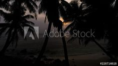 Stock Footage of Moody silhouette palm trees (timelapse) at golden sunrise with small waves on a tropical island, Seychelles, Mahé, Anse Baleine. Explore similar videos at Adobe Stock Seychelles, Stock Video, High Quality Images, Palm Trees, Stock Footage, Adobe, Sunrise, Tropical, Waves