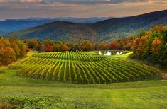 Enjoy wines harvested from our beautiful vineyards in the Blue Ridge Mountains. Burntshirt Vineyards offers tastings, winery tours, weddings, & more.