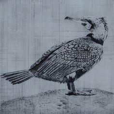 Drypoint Etching - Cormorant - by Richard Rochester #art #birdart #birds #drawing #fineart #nature #drypoint #drypointetching #etching #godwit