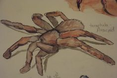 Spider Water color