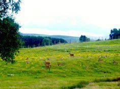 Deer in Sterling - Safari UK http://newplacesnewexperiences.wordpress.com/